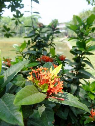 ハティアのDUSキャンパス内には色とりどりの花やフルーツが沢山