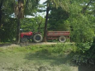 島内輸送にはトラクターが活躍します